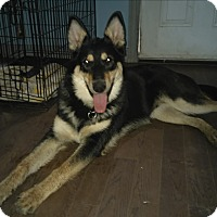Adopt A Pet :: Shylo - Northumberland, ON