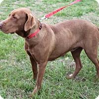 Adopt A Pet :: Bailey - Washington, DC