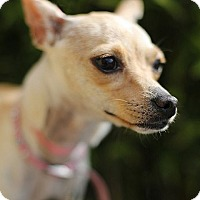 Adopt A Pet :: Norma - Berkeley, CA