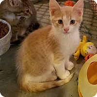 Adopt A Pet :: Niles - Geneseo, IL