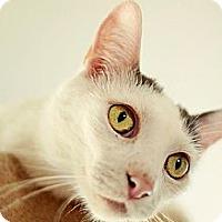 Adopt A Pet :: Gilbert - Whitewater, WI