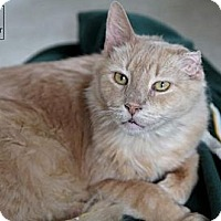 Adopt A Pet :: Bobby - Lancaster, MA