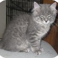 Adopt A Pet :: K-Leonard3-Rodney - Colorado Springs, CO