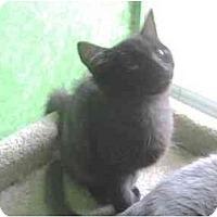 Adopt A Pet :: Sadie - Greenville, SC