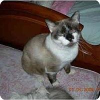 Adopt A Pet :: Sweet Simba - Columbus, OH