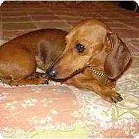 Adopt A Pet :: Giselle - San Jose, CA