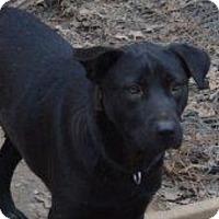 Adopt A Pet :: Sam - Hatifeld, PA