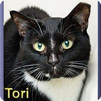 Adopt A Pet :: Tori - Aldie, VA