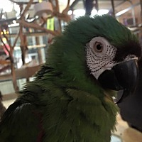 Adopt A Pet :: Bungee - severe - Blairstown, NJ