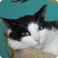 Adopt A Pet :: Chico - North Branford, CT