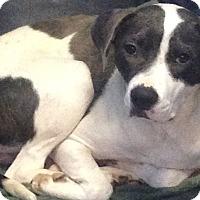 Adopt A Pet :: ANASTASIA - Pompton Lakes, NJ