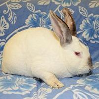 Adopt A Pet :: Fresno - Chesterfield, MO