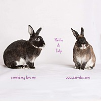 Adopt A Pet :: Merlin and Tulip - Jurupa Valley, CA