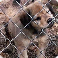 Adopt A Pet :: London - Waller, TX