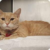 Adopt A Pet :: Layla - Fort Riley, KS