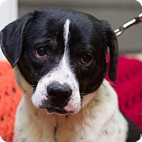 Adopt A Pet :: Prince - Evansville, IN