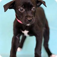 Adopt A Pet :: Ravens - Waldorf, MD