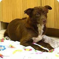 Adopt A Pet :: Reba - Boca Raton, FL