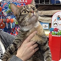 Adopt A Pet :: Peaches - Troy, OH