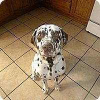 Adopt A Pet :: Becket - Middletown, PA