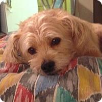 Adopt A Pet :: Rusty - Albany, NY