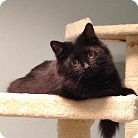 Adopt A Pet :: Kelly Anne - Byron Center, MI