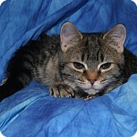 Adopt A Pet :: Ariel - Cincinnati, OH