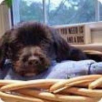 Adopt A Pet :: Twiglet - Marlton, NJ