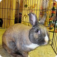 Adopt A Pet :: Horton and Rosita - Foster, RI