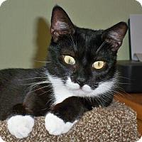 Adopt A Pet :: Tippytail - Brooklyn, NY