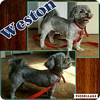 Adopt A Pet :: Weston - Scottsdale, AZ