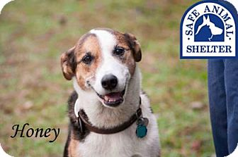 Border Collie Mix Dog for adoption in Middleburg, Florida - Honey