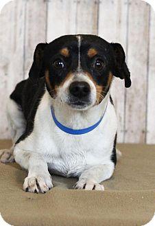 Beagle Mix Dog for adoption in Waldorf, Maryland - Cricket