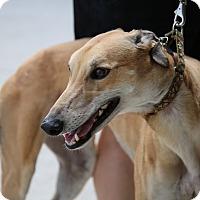Adopt A Pet :: Low - Brandon, FL