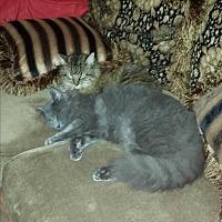 Adopt A Pet :: Freddy - Chiefland, FL