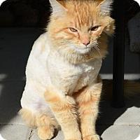Adopt A Pet :: Wheeler - Gardnerville, NV