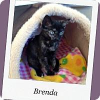 Adopt A Pet :: Brenda - Tombstone, AZ