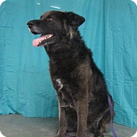 Adopt A Pet :: Maximus - LaGrange, KY