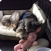 Adopt A Pet :: Skittles - Worcester, MA