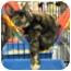 Photo 1 - Domestic Shorthair Cat for adoption in Harrisburg, North Carolina - Miranda