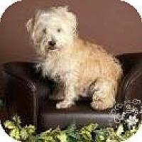 Adopt A Pet :: Rockstar - Phoenix, AZ