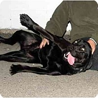Adopt A Pet :: Ella - Meridian, ID
