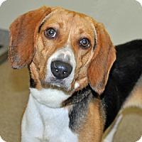 Adopt A Pet :: Sprout - Port Washington, NY