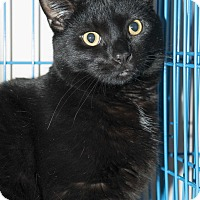 Adopt A Pet :: Samson - New York, NY