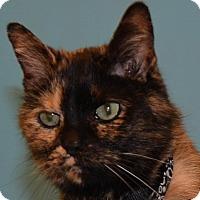 Adopt A Pet :: Callie T. - Cincinnati, OH
