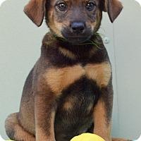 Adopt A Pet :: Irving - Pleasant Plain, OH