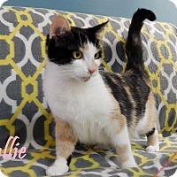 Adopt A Pet :: Callie - Bucyrus, OH