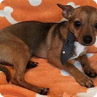 Adopt A Pet :: Slinky - North Brunswick, NJ