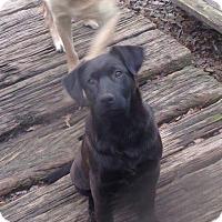 Adopt A Pet :: JAKE - Berwick, ME