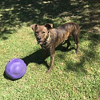 Adopt A Pet :: Benson - Morriston, FL